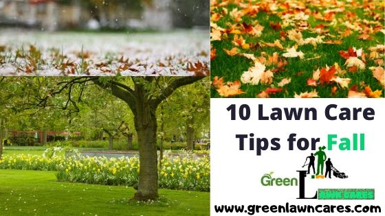 10 Lawn Care Tips for Fall