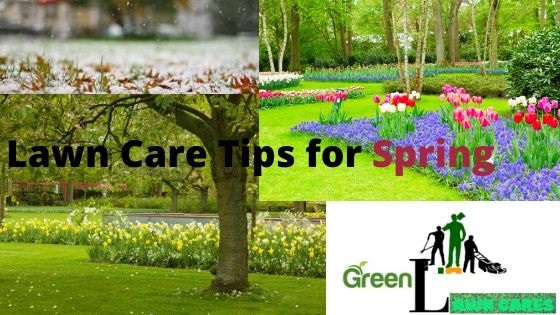 lawn care tips for the spring