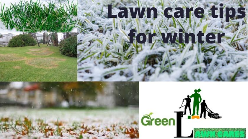 Lawn care tips for winter