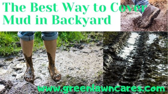 best way to cover mud in the backyard