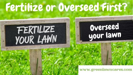 Fertilize or Overseed First
