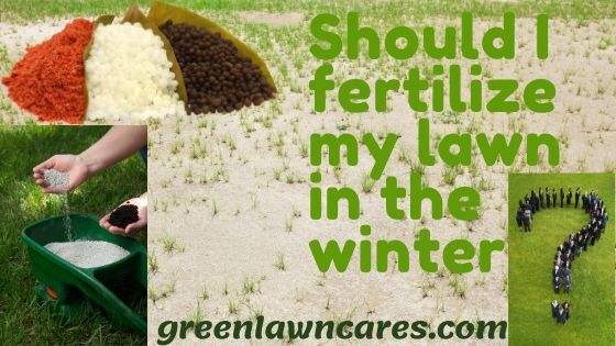 Should I fertilize lawn in winter