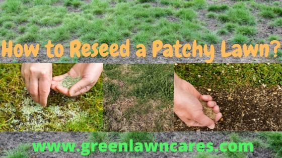 how to reseed a patchy lawn