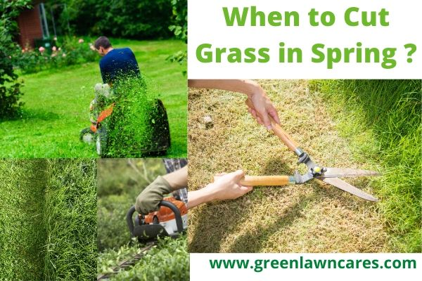 When to Cut Grass in Spring