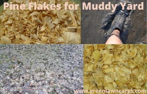 Pine Flakes for Muddy Yard