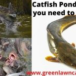 catfish ponds